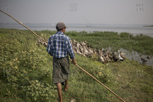 Amarapura, Mandalay, Myanmar - March 11, 2015: Duck herder with his flock at taungthaman lake