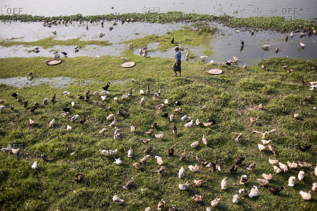 Amarapura, Mandalay, Myanmar - March 11, 2015: View of duck herder with his flock at taungthaman lake