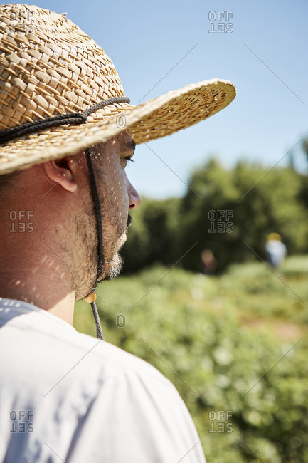 Portrait of a farmer in hat overlooking his crops