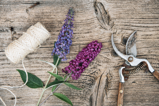 Buddleja flowers with pruner on wooden background