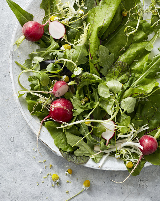 Salad with radish, greens and chamomile