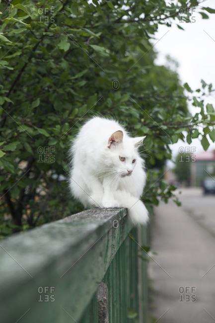 White fluffy cat sitting on green railing