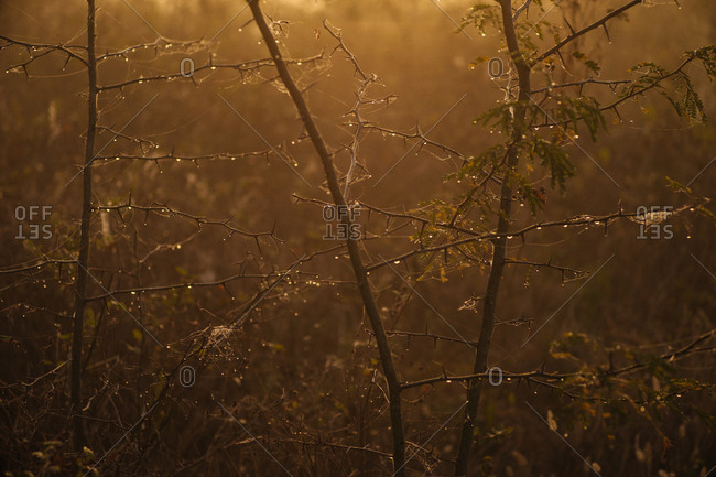 Dew on branches in sunlight