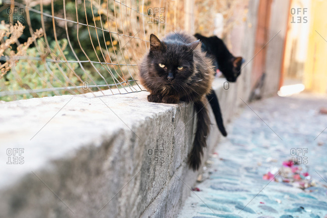 Black stray cat on street of old town of Bosa