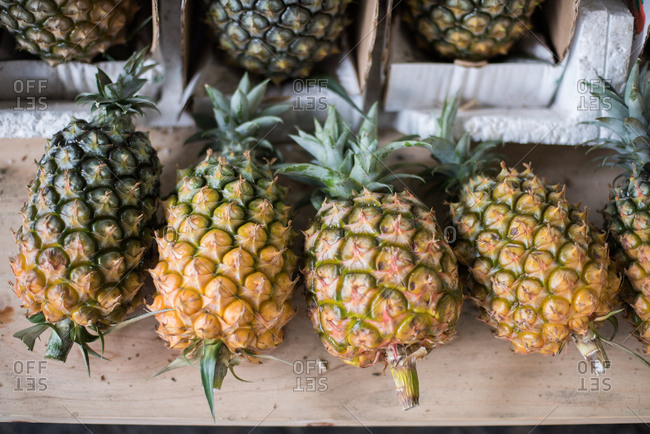 Row of ripened pineapples cut at the stem