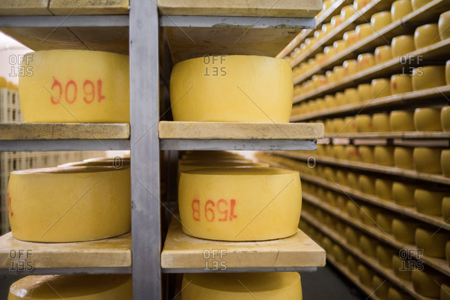 Rows of cheese wheels on shelves in a factory