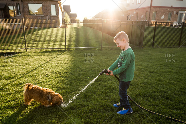 Boy spraying a garden hose for his dog to drink from