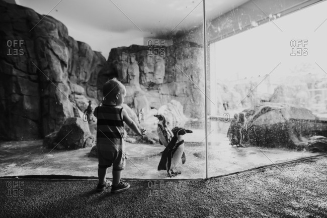 Toddler boy standing at penguin exhibit at zoo