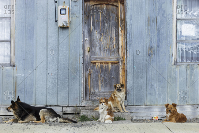 Valparaiso, Chile - February 8, 2016: Four dogs staring in front of an old house in Patagonia