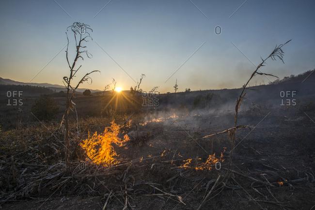 Wildfire burning dried vegetation