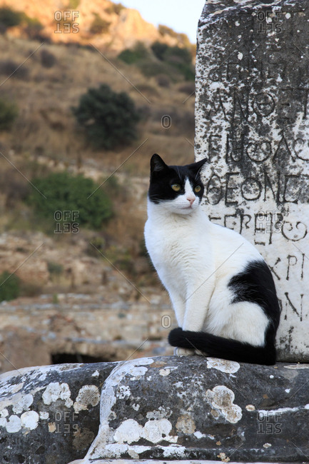 Turkey, Izmir Province, Selcuk, ancient city Ephesus, ancient world center of travel and commerce on the Aegean Sea at mouth of Cayster River. Cat sitting near column of temple,
