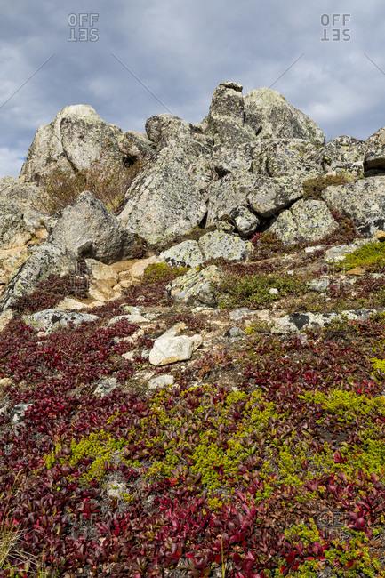 USA, Alaska, Dalton Highway. Rock outcrop in tundra