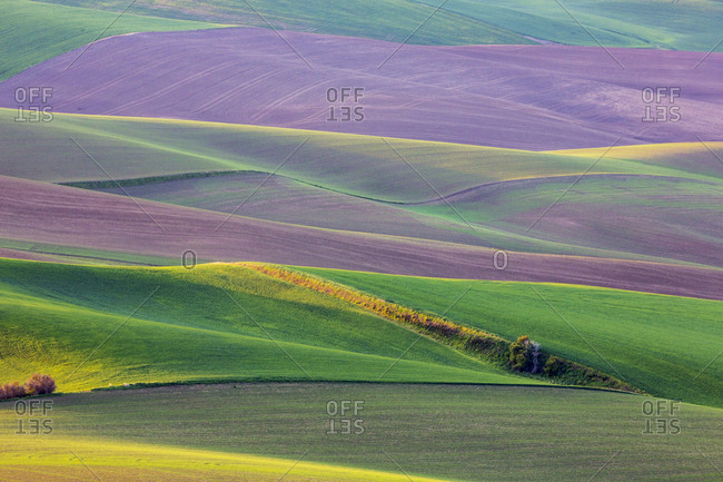 USA, Washington State, Palouse, Spring Rolling Hills of Wheat and Fallow fields