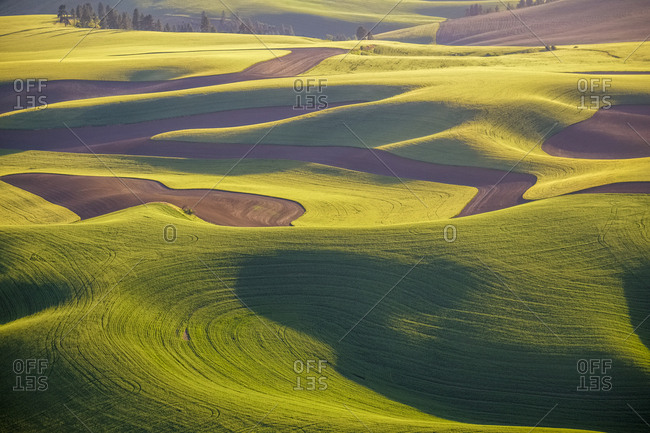 USA, Washington State, Palouse, Aerial, Rolling farmland