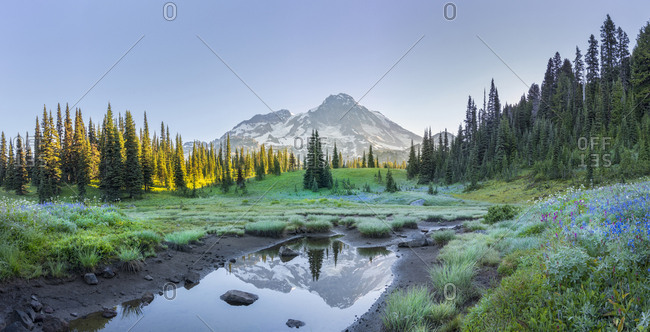 USA. Washington State. Mt. Rainier reflected in tarn amid wildflowers at Indian Henry's Hunting Ground, Mt. Rainier National Park