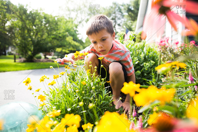 Boy using scissors to cut yellow flowers