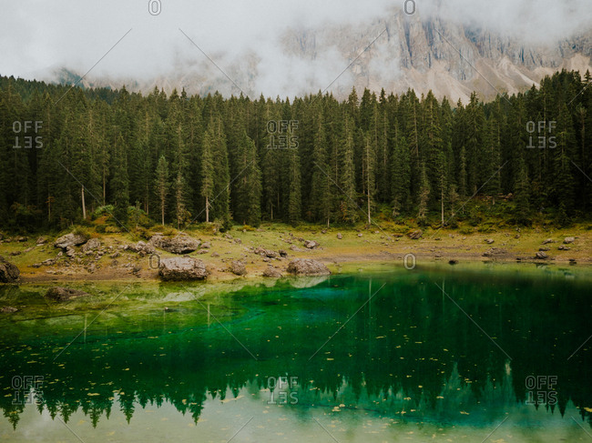 Landscape with ever-green trees in Dolomites, Italy