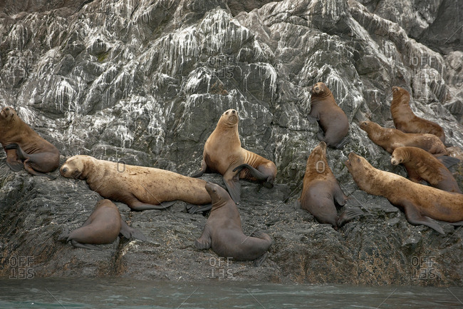 A colony of seals basking on a rock