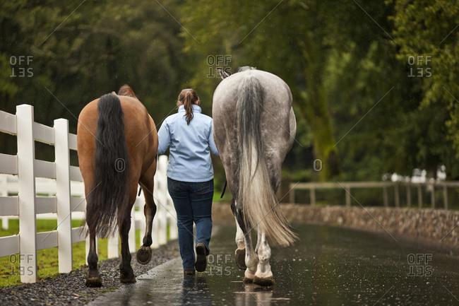 A woman leading two horses along a rainy path