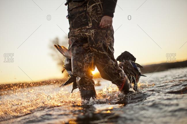 A hunter carrying dead ducks he has shot