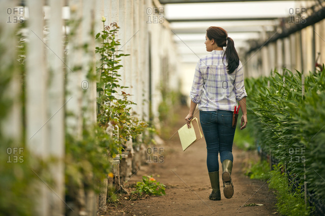 A gardener checking her crops