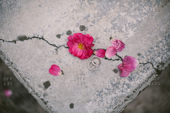 Flowers and wedding rings on concrete