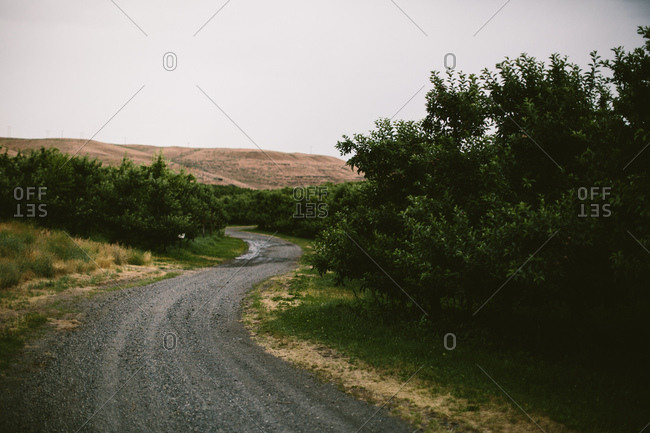 road through apple orchard