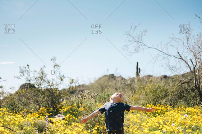 Boy in wildflowers meadow, arms open, head back, Wadell, Arizona, USA