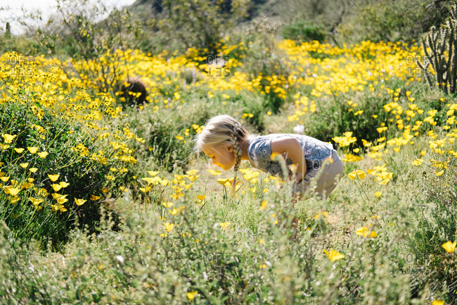 Girl in wildflowers meadow smelling flowers, Wadell, Arizona, USA