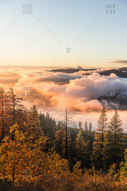 Elevated view of mist over valley forest at sunrise, Yosemite National Park, California, USA