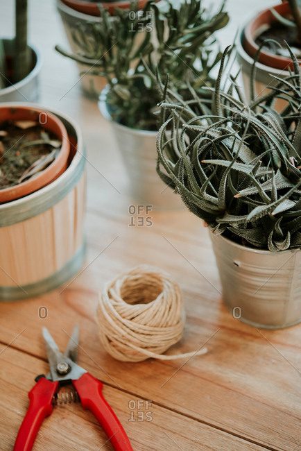 Still life of plants, secateurs and ball of string