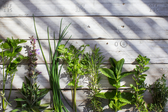 Selection of herbs in a row on wooden surface, overhead view