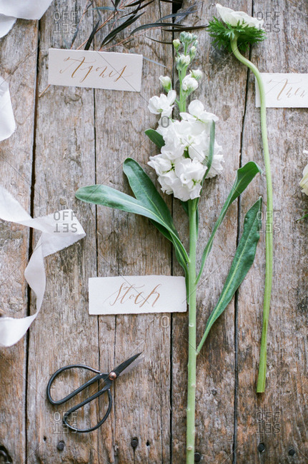 Labels with plants and flowers