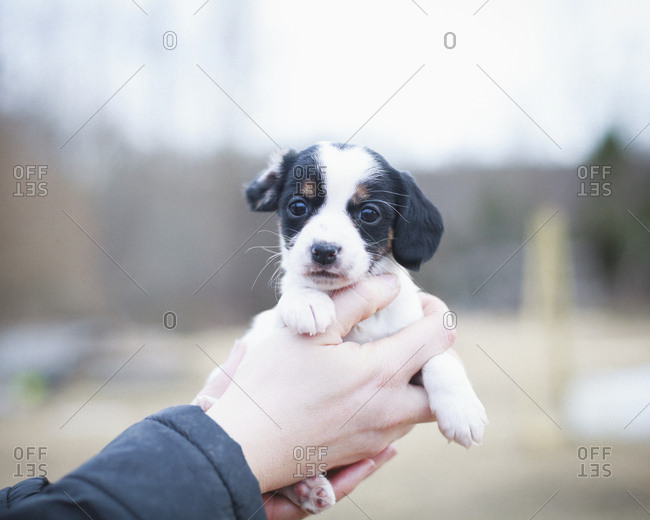 Cropped hand of person holding cute puppy outdoors