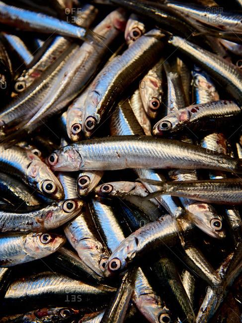 Close-up of fresh fish at seafood market