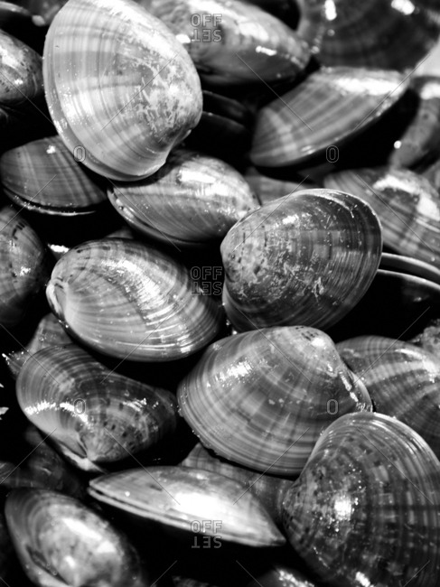 Clams at seafood market