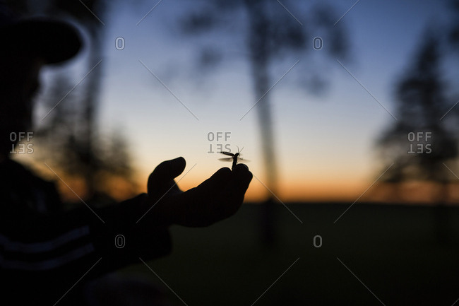 Cropped image of silhouette boy with insect on hand during dusk