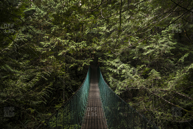 Tranquil view of footbridge in forest