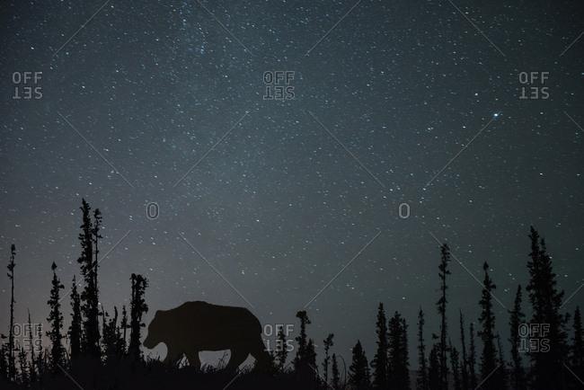 Silhouette bear on field against star field