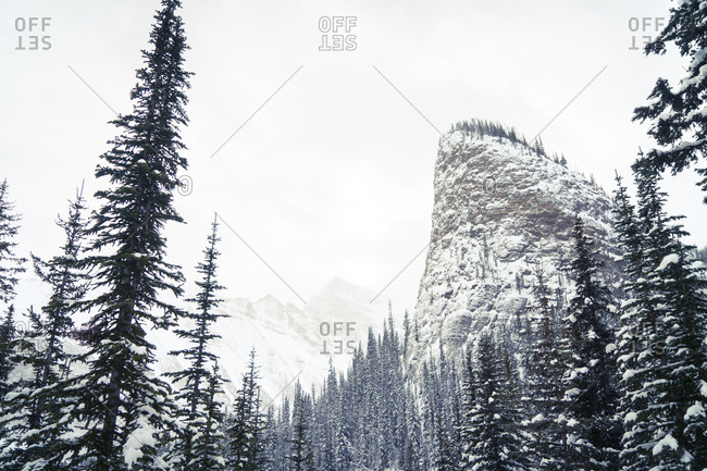 Low angle view of snowcapped mountain in forest against sky during foggy weather
