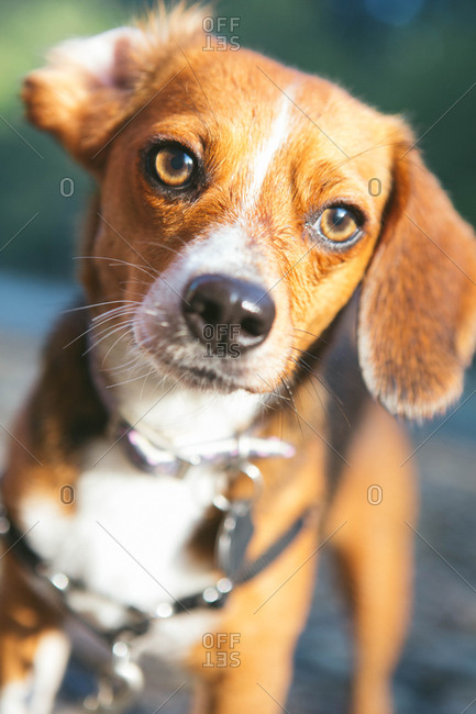 Cute dog's in portrait standing by a river