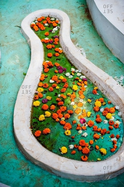 Flower blossoms floating in a shallow pool of water