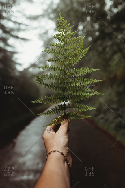 Crop hand holding and showing green leaf of fern on background of road in forest