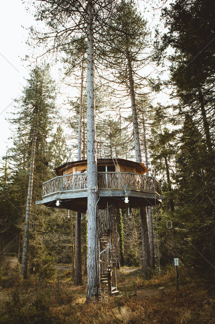 Treehouse above ground with stairs running down on background of woods
