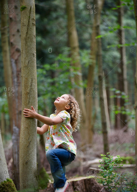 Young girl starting to climb tall tree