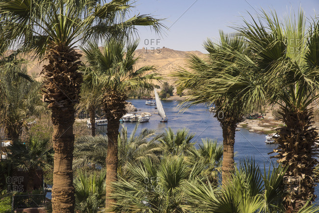 Egypt, Upper Egypt, Aswan, Gardens situated on the banks of the river Nile