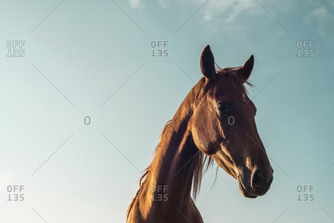 Horse head against blue sky