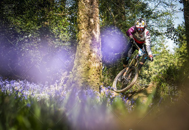 Wicklow, Wicklow, Ireland - May 13, 2016: A Racer Performing Stunt Amongst The Bluebells In Wicklow, Ireland