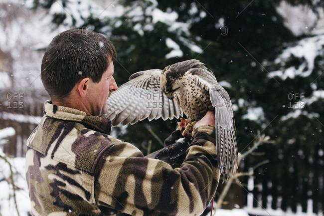 Bielsko, Slaskie, Poland - November 17, 2016: Falcon Balancing On The Hand Of Male Falconer