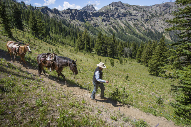 Absaroka-Beartooth Mountains, Montana, USA - July 29, 2016: A cowboy walks horses down a trail after crossing the Continental Divide in the Montana backcountry.